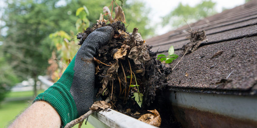 Pests, Insects, and Disease Drawn by Clogged Gutters and Pooled Water